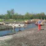 Extra zandlaag bij speeleiland Krimpenerhout