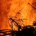 Kerstboomverbranding in Krimpen aan den IJssel