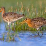 Code rood voor weidevogels vraagt om groene zones
