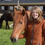 Paarden helpen met het hervinden van je innerlijke balans