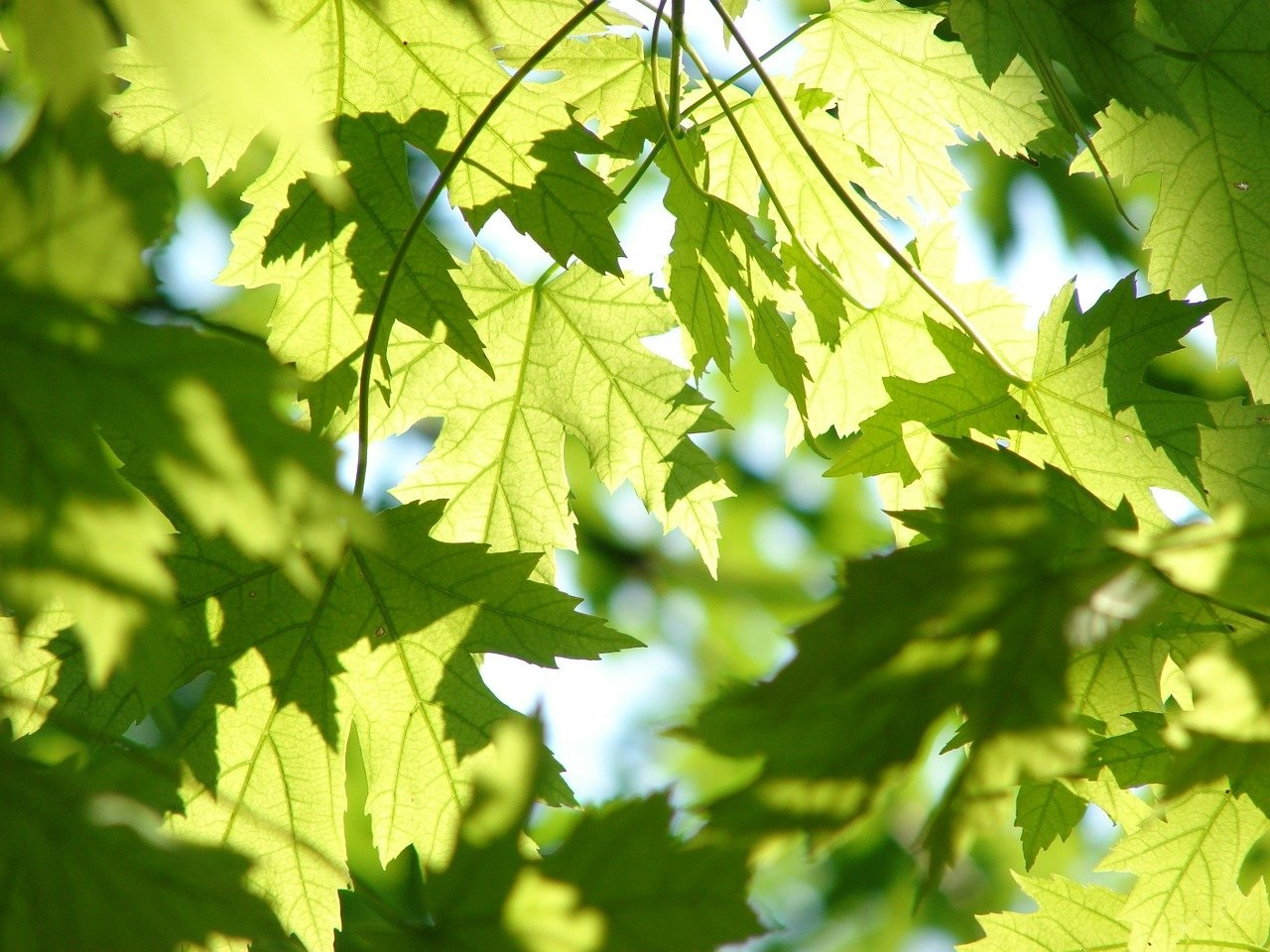 Boom opzetten over bomenbeleid Krimpenerwaard
