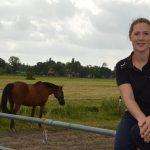 Oproep om Limburgse paarden op te vangen leidt tot veel reacties