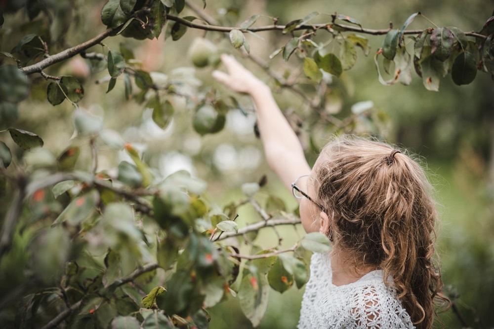 Zelfplukdagen: zelf appels en peren plukken